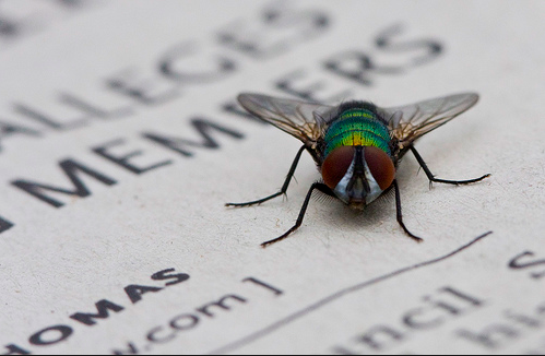 Fly on Paper